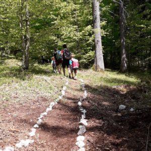 Un sentiero di SelvArt