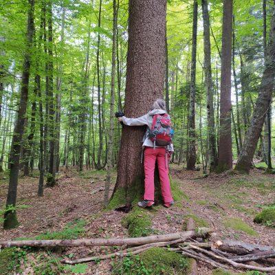 bagno di foresta