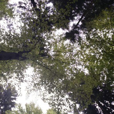bosco SelvArt